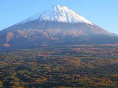 Foto: Hutan Bunuh Diri di Jepang