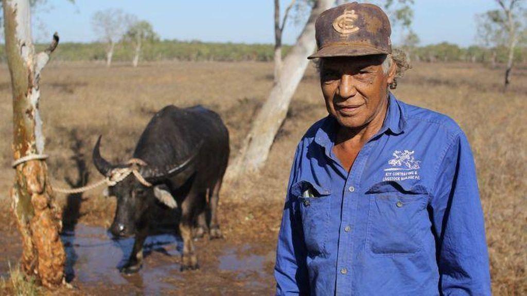 Kisah Para Pemburu Kerbau Liar di Australia Utara