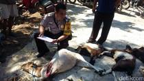 Jadi Incaran Anjing Liar,  Polisi Imbau Warga Ungsikan Ternaknya