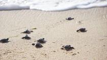 500 Ekor Tukik Dilepas di Pantai Sarangan Bali