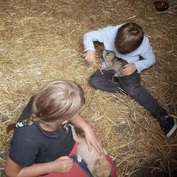 Foto: Aksi Menggemaskan si Kecil Bersama Hewan Ternaknya