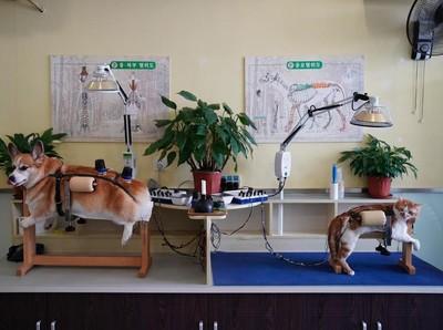 Foto: Akupuntur Khusus Kucing dan Anjing