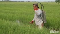 Pemkab: Brebes Jadi Pengguna Pestisida Tertinggi se-ASEAN