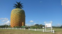 Rumah Spongebob di Dunia Nyata