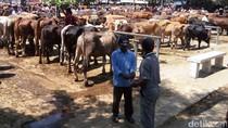 Pedagang Sapi di Sukoharjo Mengeluh Sepi Jelang Idul Adha