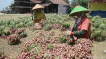 Pemkab Brebes Diminta Kontrol Penggunaan Pestisida oleh Petani