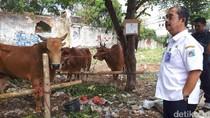 Wali Kota Sidak Tempat Penjualan Hewan Kurban di Tanah Abang
