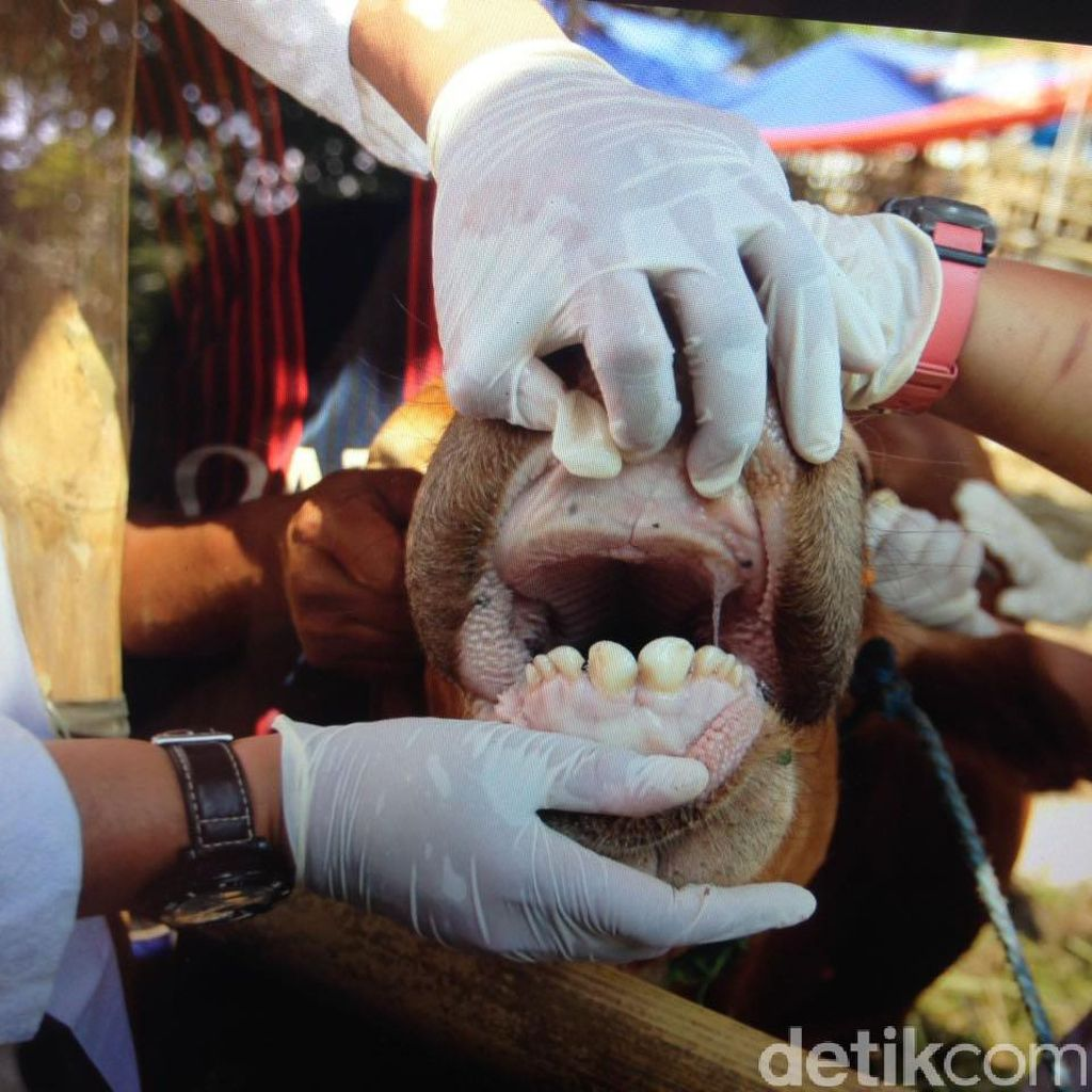 3.037 Hewan Kurban di Jakarta Pusat Dipastikan Sehat