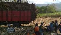 Di Bondowoso, Petani Tebu Tolak Demo Pabrik Gula