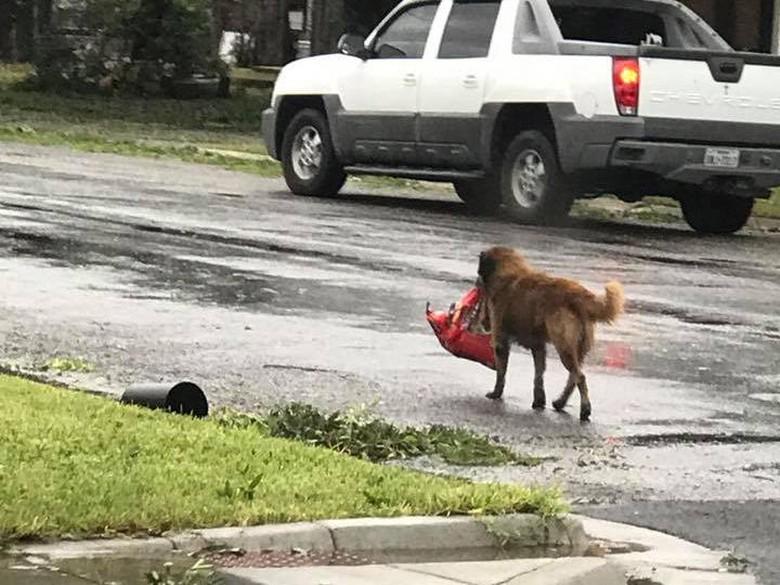 Cerita Viral Anjing Bawa Dog Food Usai Badai Harvey
