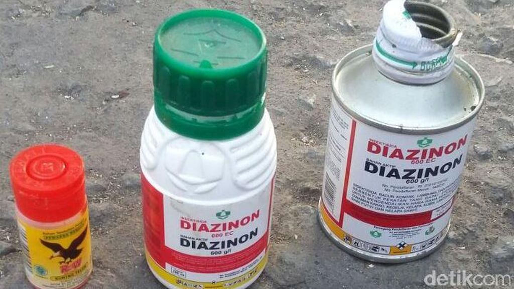 Kata Dokter Soal Bahaya Penggunaan Pestisida Sebagai Obat Kutu