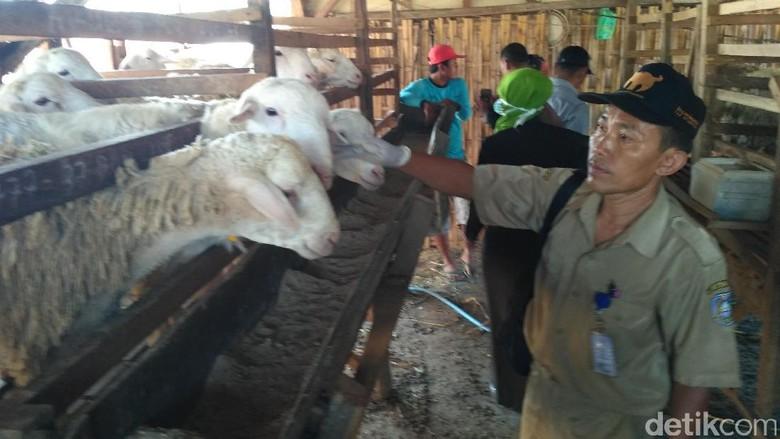 MUI: Penyembelih Hewan Kurban Tak Harus Laki-laki