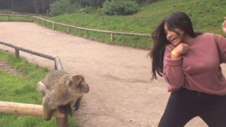 Traveler dikejar monyet (@xxxxxkn1234/Twitter)