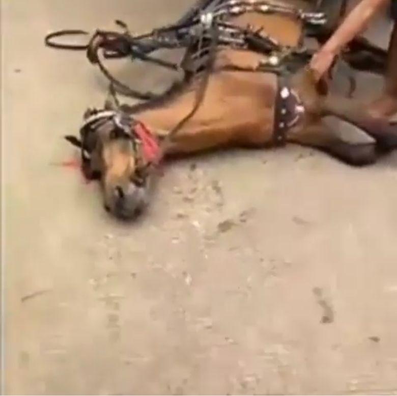 Viral Video Kuda Delman Tetap Dicambuk Meski Kelelahan