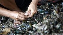 Reklamasi Pulau G Berlanjut, Nelayan Cemas Lagi