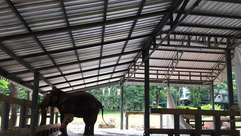 Foto: Seperti Ini Rumah Sakit Khusus Gajah