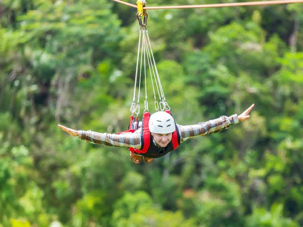 Main Flying Fox Yuk!