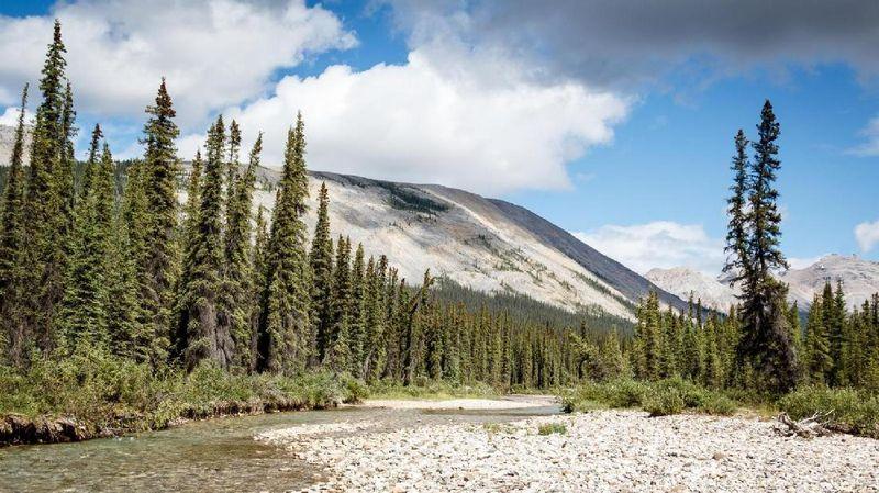 Pegunungan Yukon di Kanada identik dengan penambangan emas pada abad 19 silam. Namun kini, traveler datang ke Yukon untuk mencari tahu sejarah penambangan emas (Vivien Cumming/BBC)
