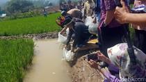 Sebar Nila Hitam di Sukabumi, Teten Masduki Ingatkan Ketahanan Pangan