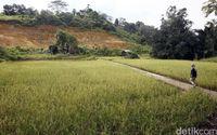 Optimisme Ekspor Beras ke Malaysia dan Realitas Entikong