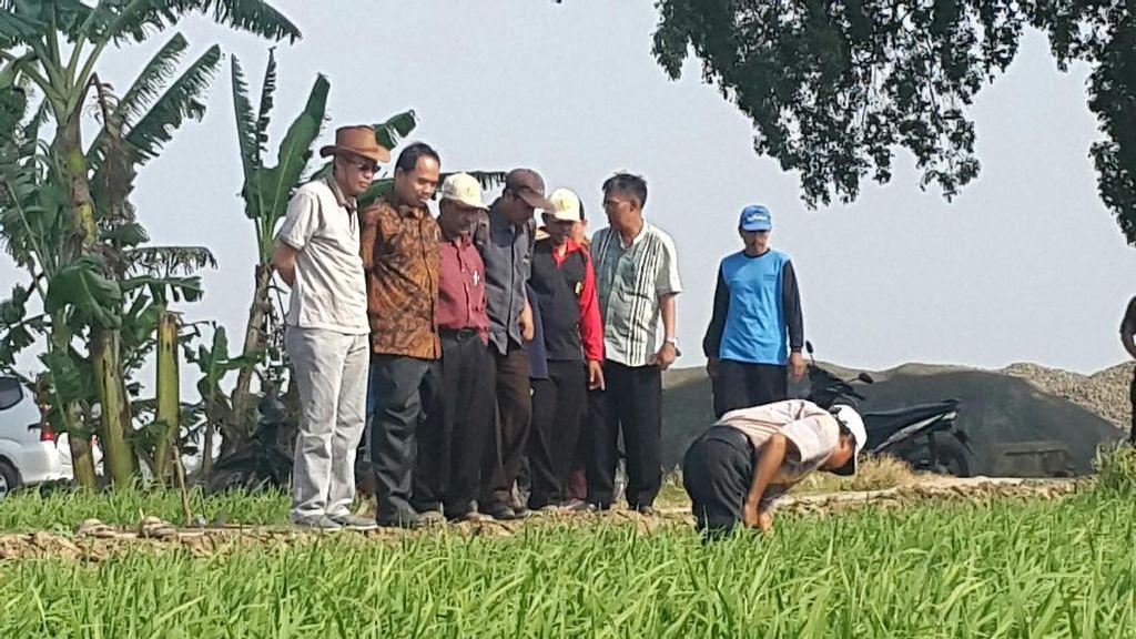 Wereng & Virus Kerdil di Subang di Bawah Ambang Batas