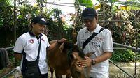 Kuda Chester dielus-elus dokter hewan yang merawatnya /