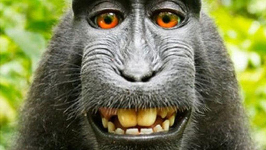 Fotografer Menangkan Sengketa Foto Selfie Monyet di Hutan Indonesia
