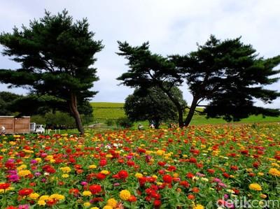 Foto: Taman Cantik nan Asri Favorit Turis di Jepang
