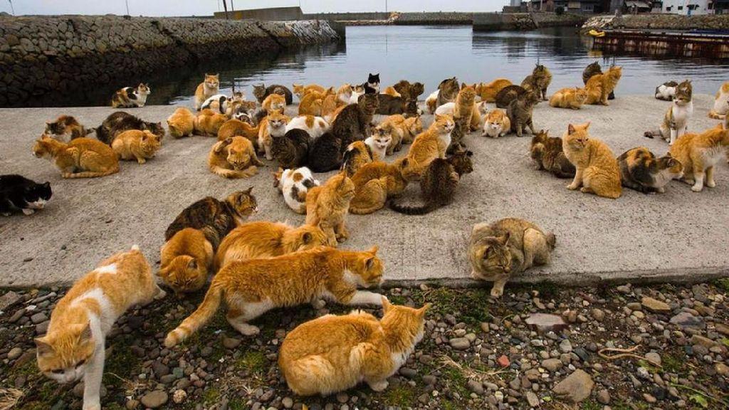 Video: Kucing di Pulau Ini 6 Kali Lipat Lebih Banyak dari Penduduk!
