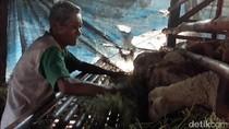 Kisah Kakek Datam, 15 Tahun Hidup Sendirian di Kandang Kambing