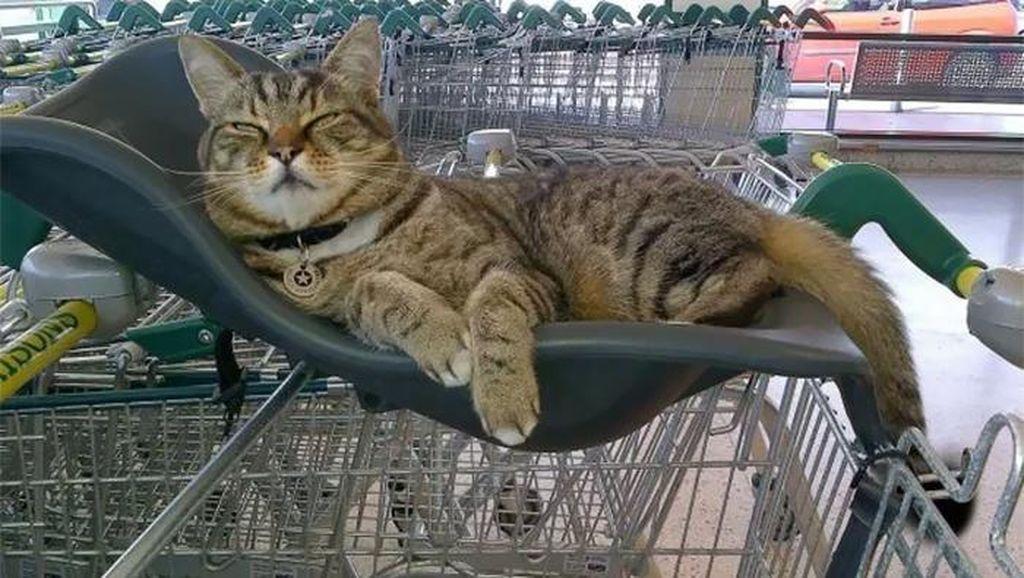 Kucing yang Jadi Pengunjung Setia Supermarket Ini Tetap Dikenang Meski Sudah Tiada