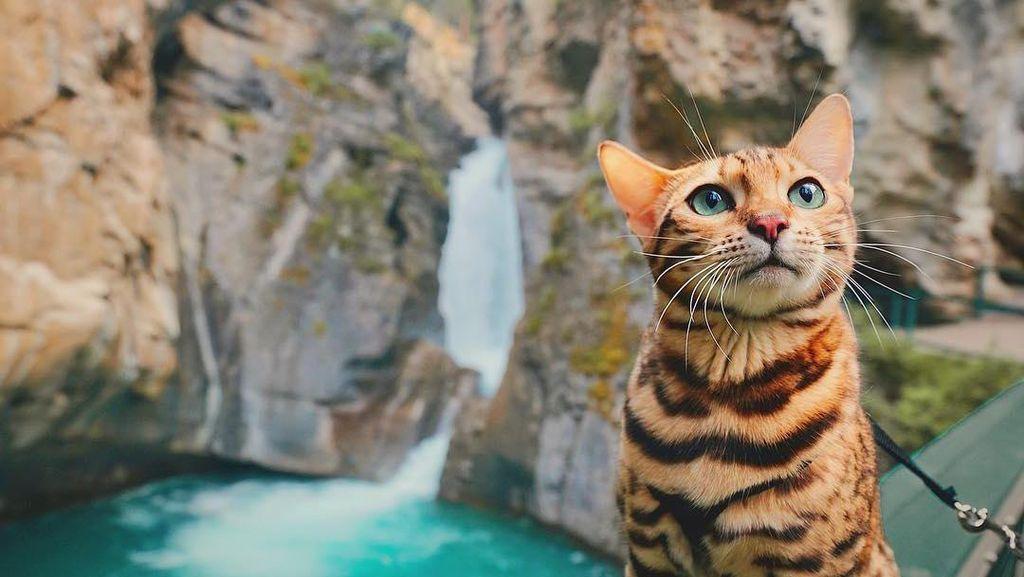 Suki, Kucing yang Suka Traveling