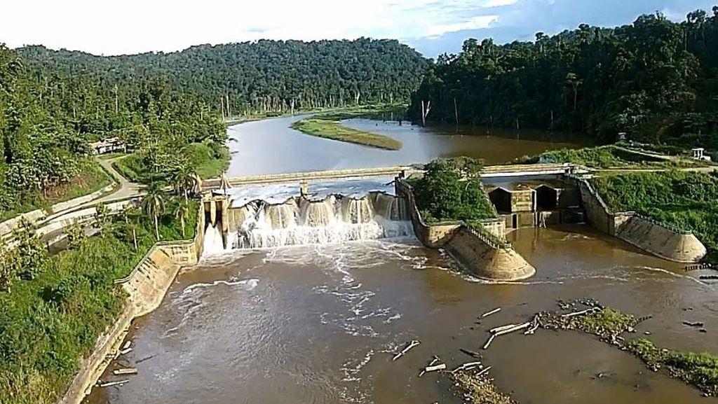 Begini Cara Pemerintah Jaga Produksi Pangan Papua