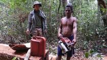 5 Pelaku Pembalakan Liar di Taman Nasional Danau Sentarum Ditangkap
