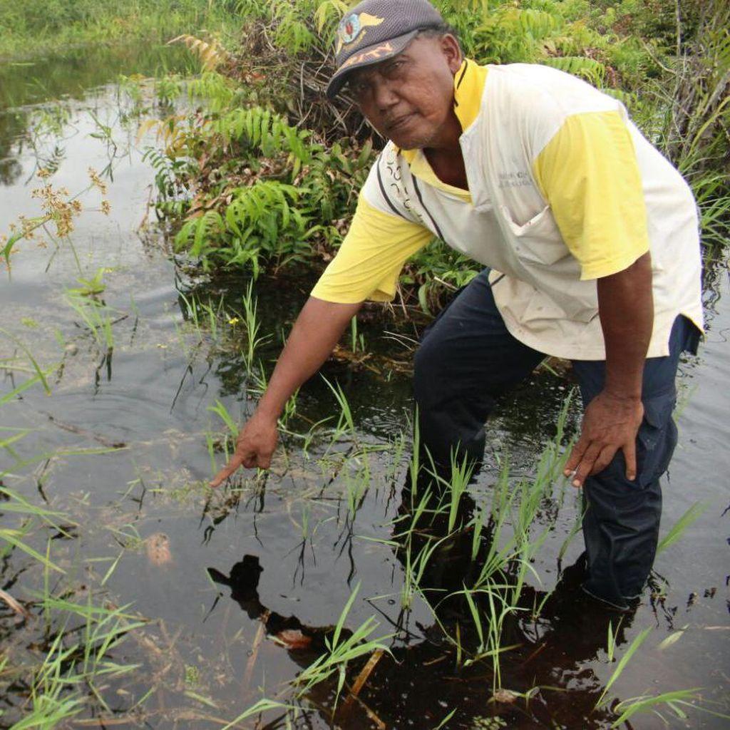 Upacara Tolak Bala, Kepala Kambing akan Diberikan ke Buaya di Riau