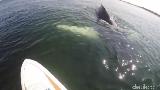 Bikin Kaget! Paus Bungkuk Muncul Saat Pria ini Memancing