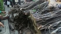 Pohon Tumbang yang Timpa Mobil di KS Tubun Dievakuasi, Lalin Lancar