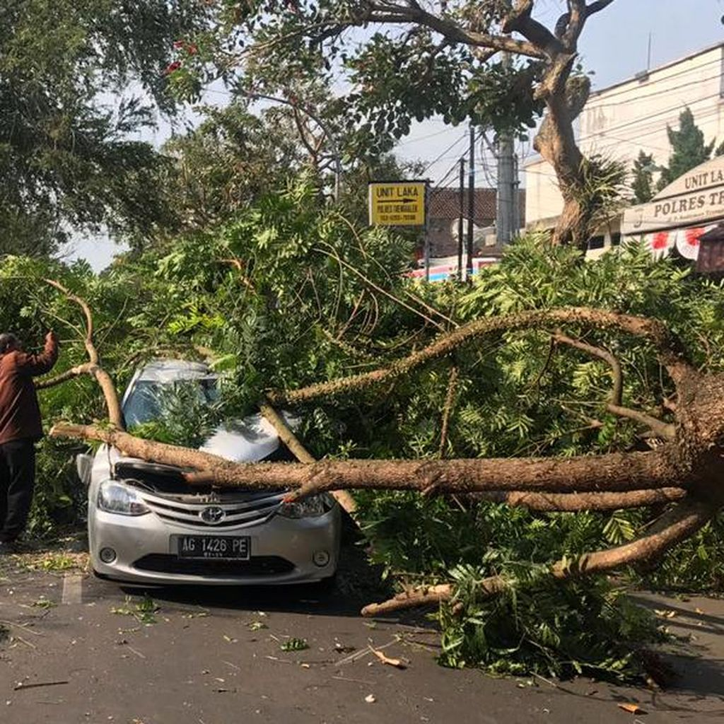 Bapak dan Anak Selamat Meski Mobil Tertimpa Pohon Tumbang