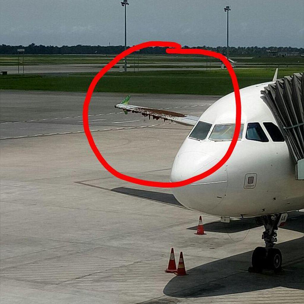 Pesawat Citilink di Bandara Kualanamu Diserang Lebah