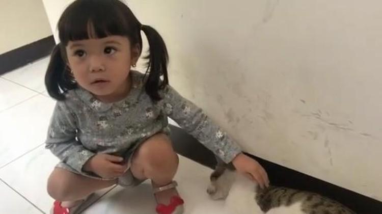Niatnya Main, Eh Tangan Gempi Malah Digigit Kucing