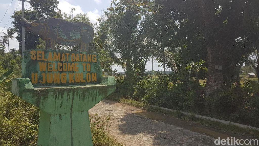 Kabar Baik, 4 Anak Badak Jawa Lahir di Ujung Kulon