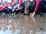 Ratusan Anak Penyu Dilepas di Pantai Serang Blitar