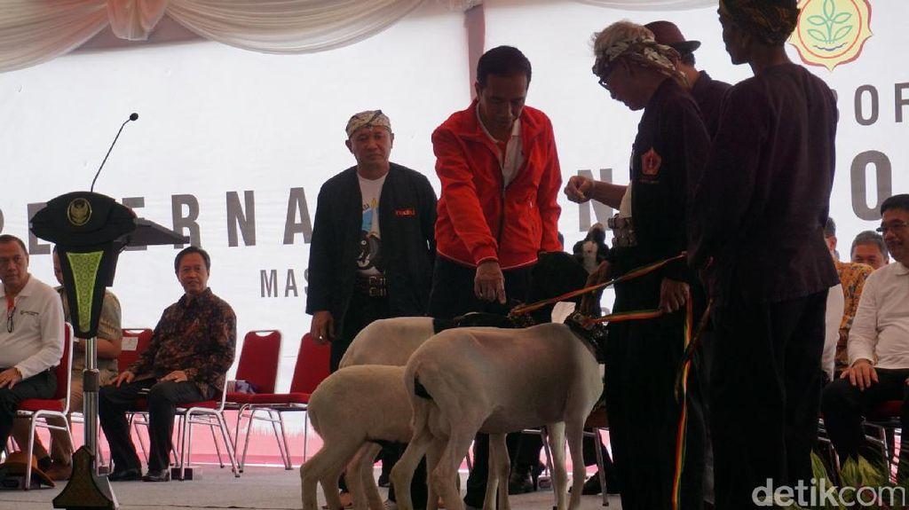 Jokowi Pamer Kambing di Jambore Peternakan: Nggak Kurus Kayak Saya