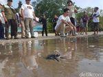 Selain Badak, Ujung Kulon Jadi Habitat Berbagai Jenis Penyu