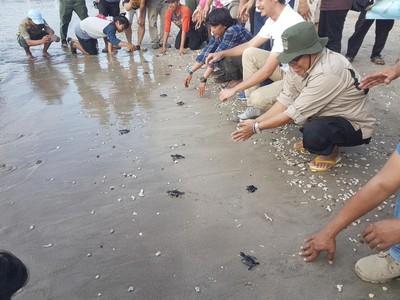 Yang Kamu Belum Tahu, Ujung Kulon Punya Konservasi Penyu