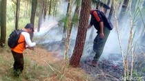 80 Hektare Hutan di Mojokerto Terbakar