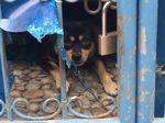 Melihat Lokasi Pelarangan Pelihara Anjing di Bekasi