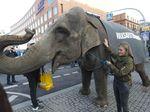 Gajah Turun di Jalan Saat Pemilu Kanselir Jerman, Ada Apa?