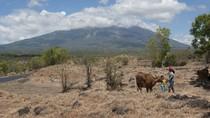 Aktivitas Gunung Agung Meningkat, Jumlah Pengungsi Makin Bertambah