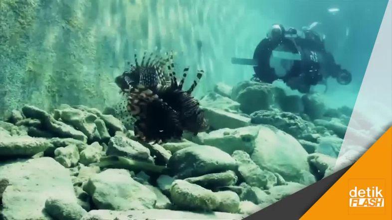 Ternyata Ada Robot Penangkap Lionfish